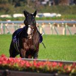 【競馬】【悲報】ダンビュライトさん骨折・・・最低3ヶ月以上かかる見込み