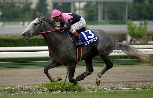 【競馬】藤沢調教師「菊花賞は運が良くないと強い馬でも勝てない。強い三歳馬は天皇賞に出たほうがいい」