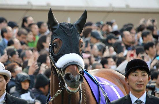 【競馬】シルク公式でアーモンドアイの次走はドバイターフかシーマクラシックに決定