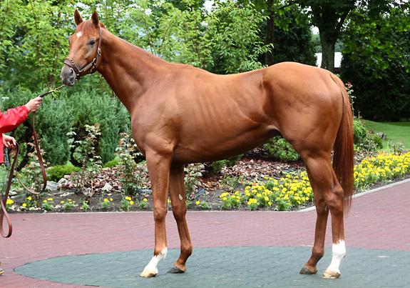 【競馬】アイルハヴアナザーが米国に帰国【種牡馬】