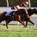 【競馬】【悲報】今年のジャパンカップ、外国馬はサンダリングブルー1頭のみ 過去最低頭数で確定か