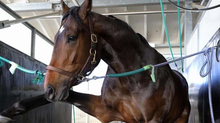 【競馬】【悲報】サートゥルナーリア超絶劣化