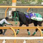 【競馬】シャケトラ、安楽死・・・